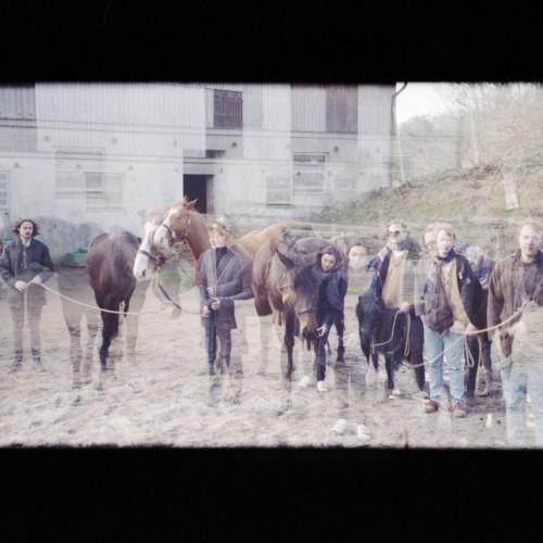 Oracles horses 1 c Tobias Huschka
